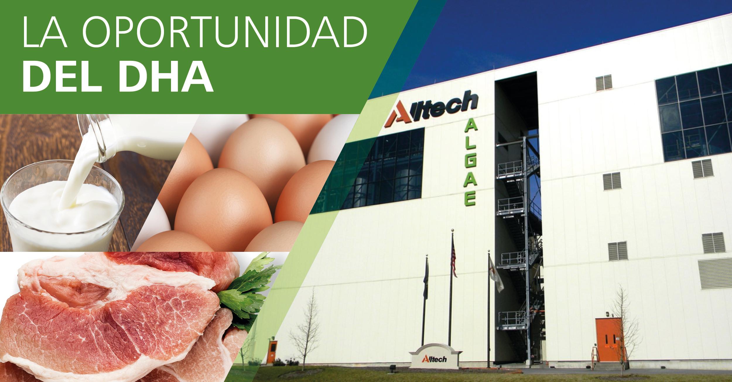 Productores podrán enriquecer la carne de cerdo, leche y huevos con DHA