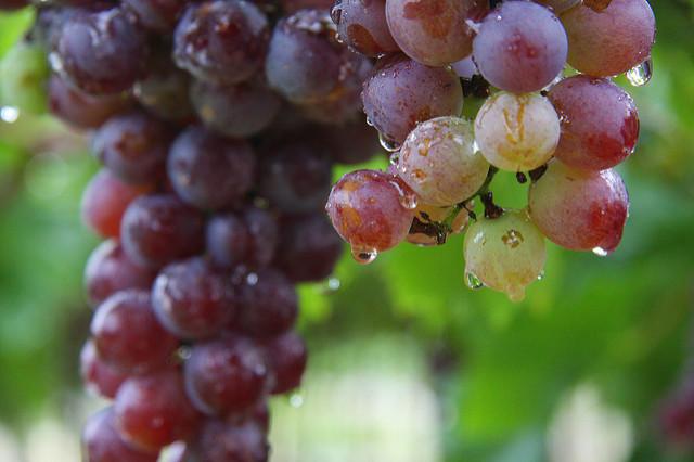 La uva fue la más afectada con las lluvias