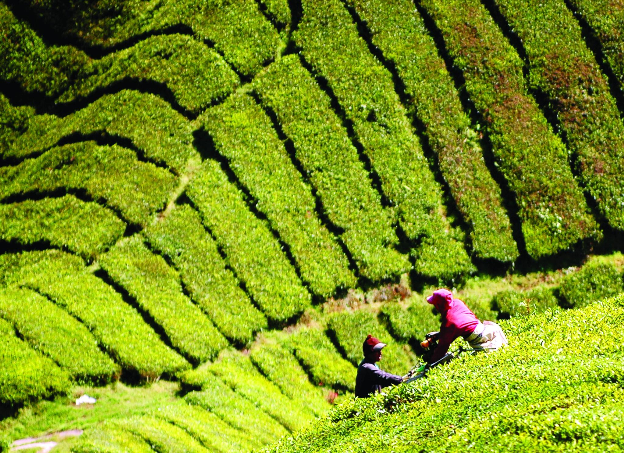 Entre la cosecha y el trekking