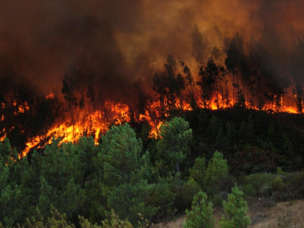 Superficie agrícola sufre consecuencias de incendios forestales