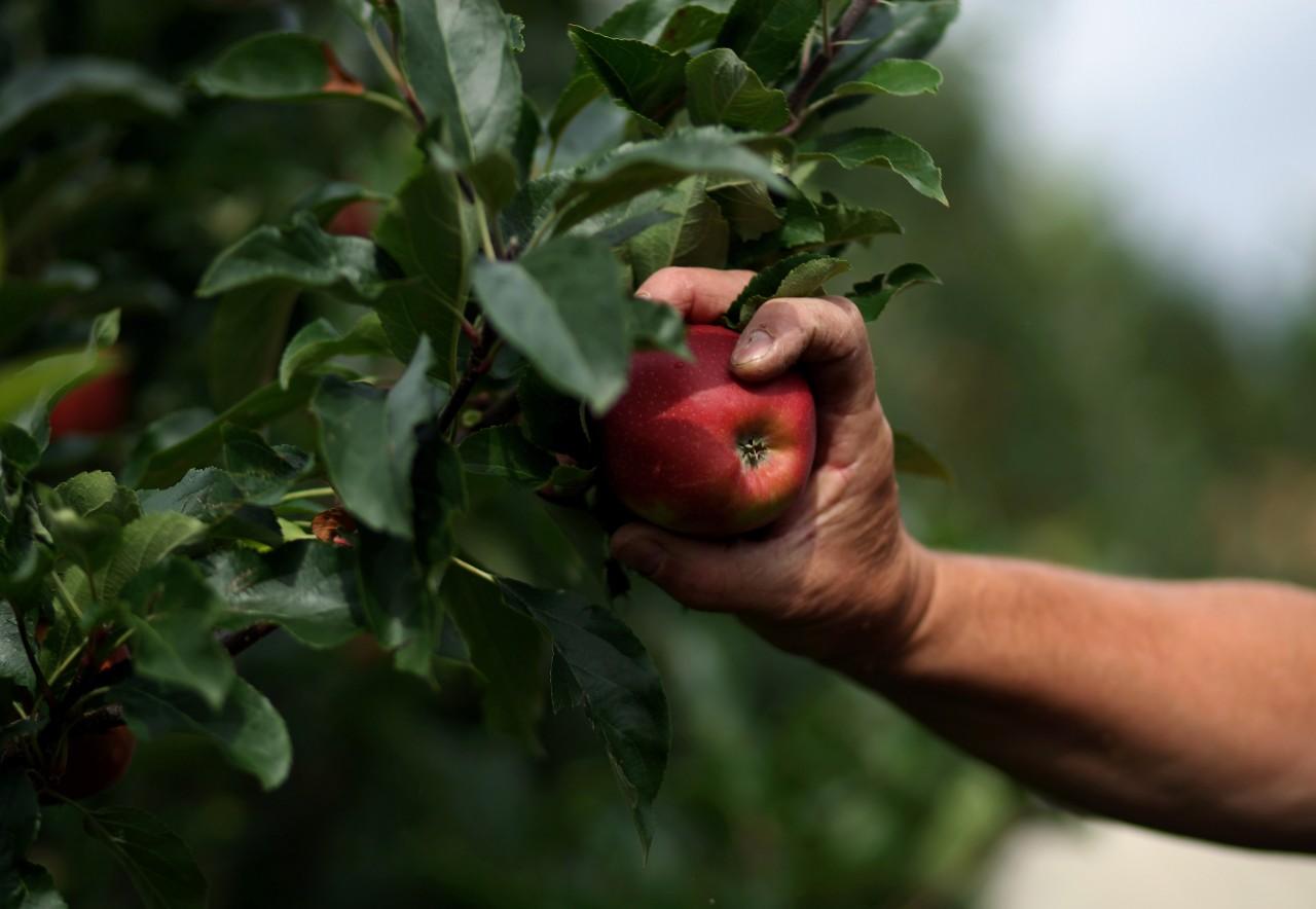 Comienza la temporada de fiscalización agrícola