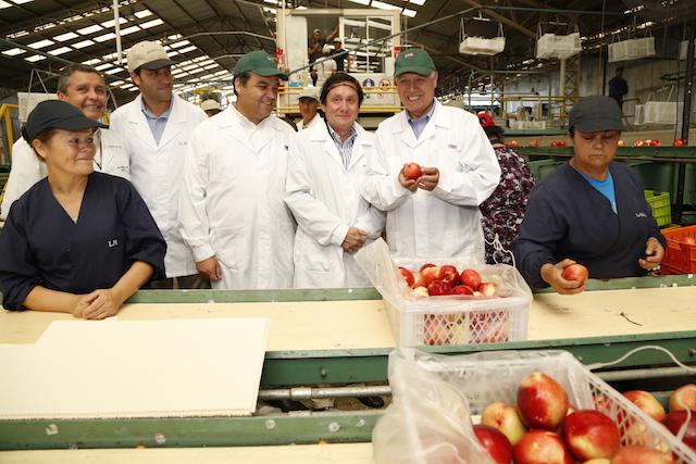 Nectarines chilenos pueden ingresar a China