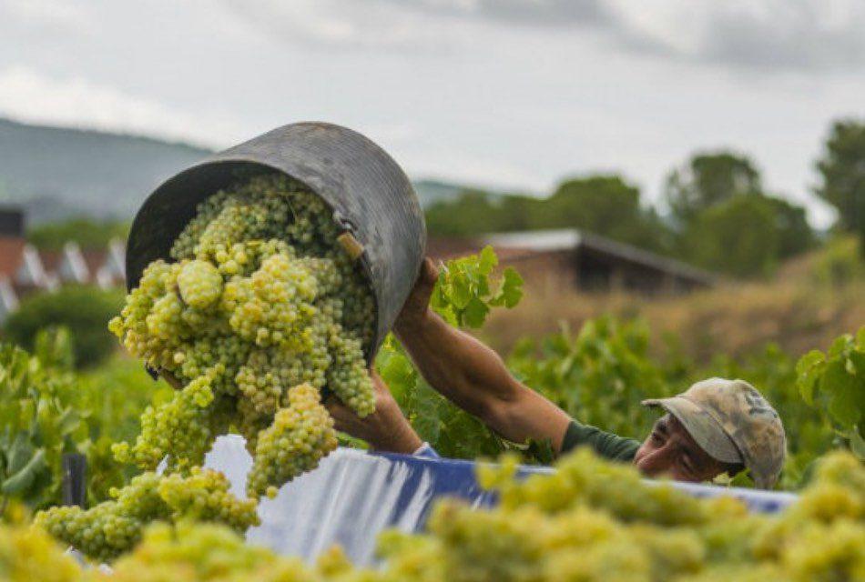 Positivo Proyecto de plaguicidas en uva vinífera