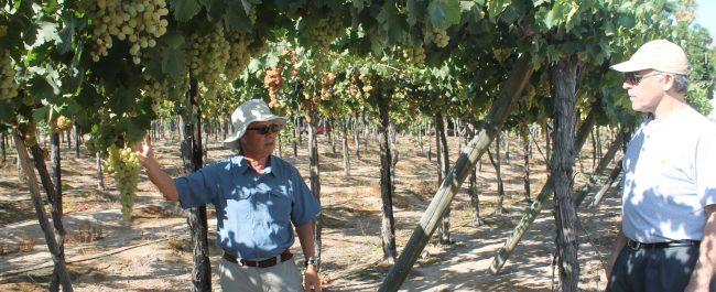 Investigador estadounidense valora trabajo varietal en uvas