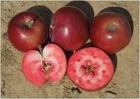manzana pulpa roja1A