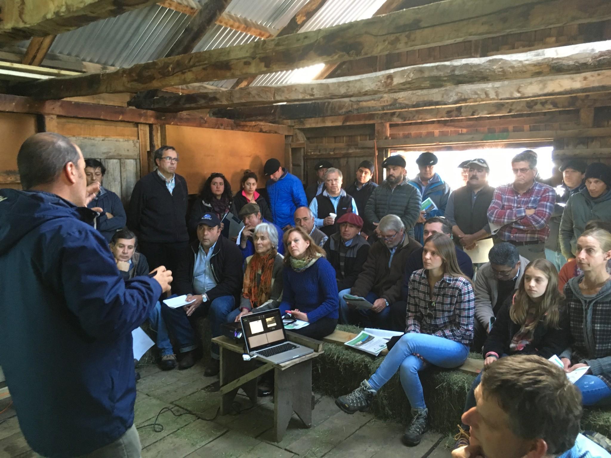 Selección genética de ganado en Aysén busca reactivar la masa ganadera