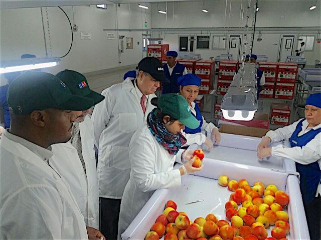 Servicio de Inspección Sanitaria de Animales y Plantas de USA visita la industria de la fruta chilena