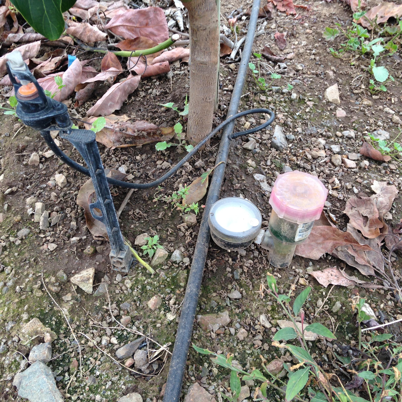 Métodos para monitorear la humedad en el suelo en el palto