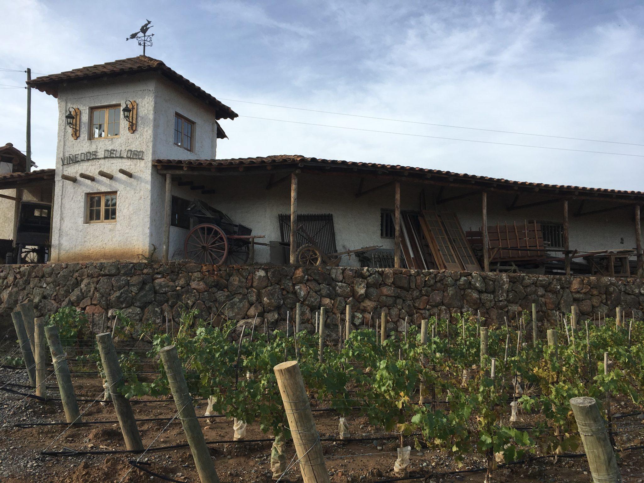 Producción sustentable llega a la industria vitivinícola