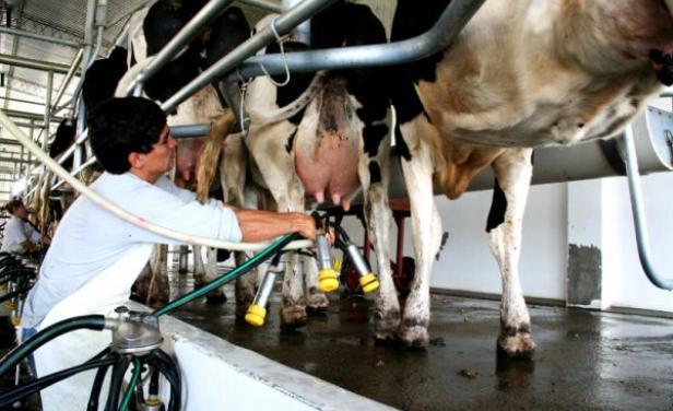 Producción de leche mundial aumentó un 1% en abril