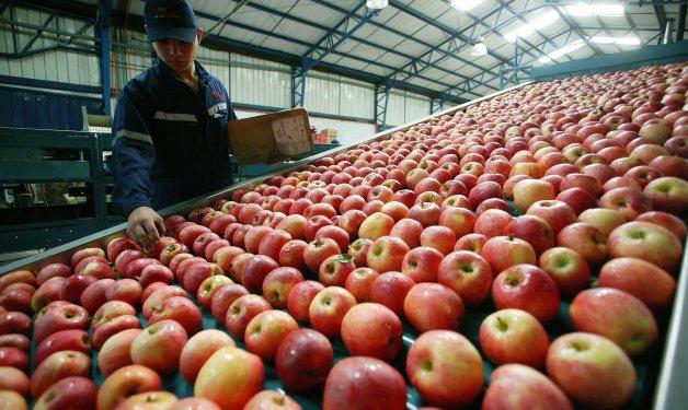 Argentina aumenta importación de manzanas, una oportunidad para Chile