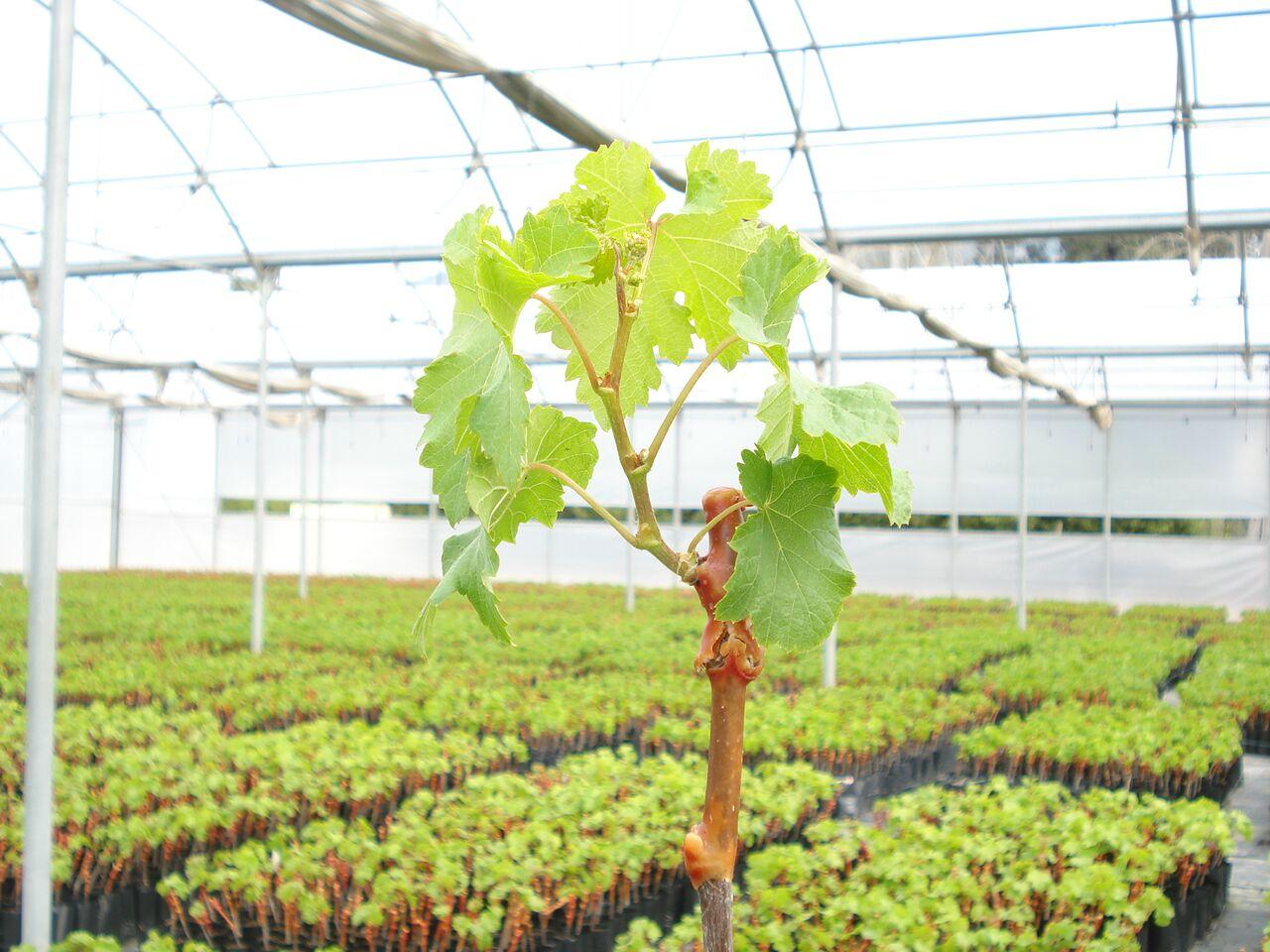 Viveros apoyan agricultores frente al Código de Aguas