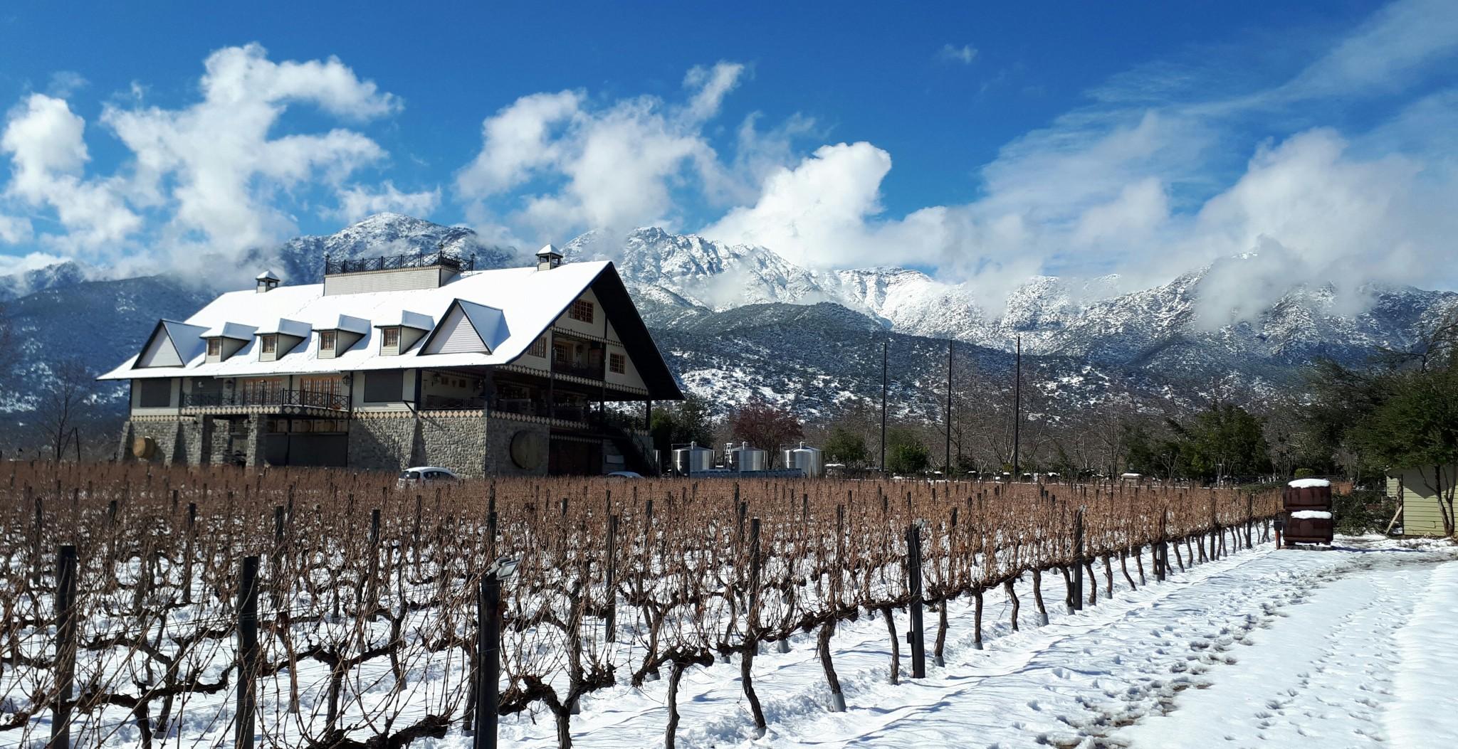 Viñas blancas