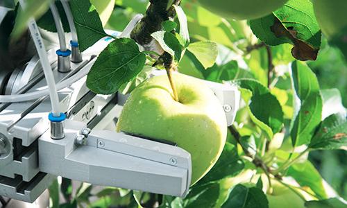 Robot inteligente permitirá cosechar frutas según su madurez