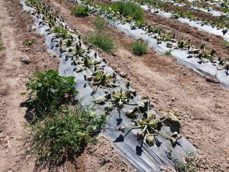 A la medida para la agricultura