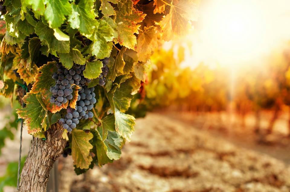 Viña Lurton busca desarrollar vinos biodinamicos