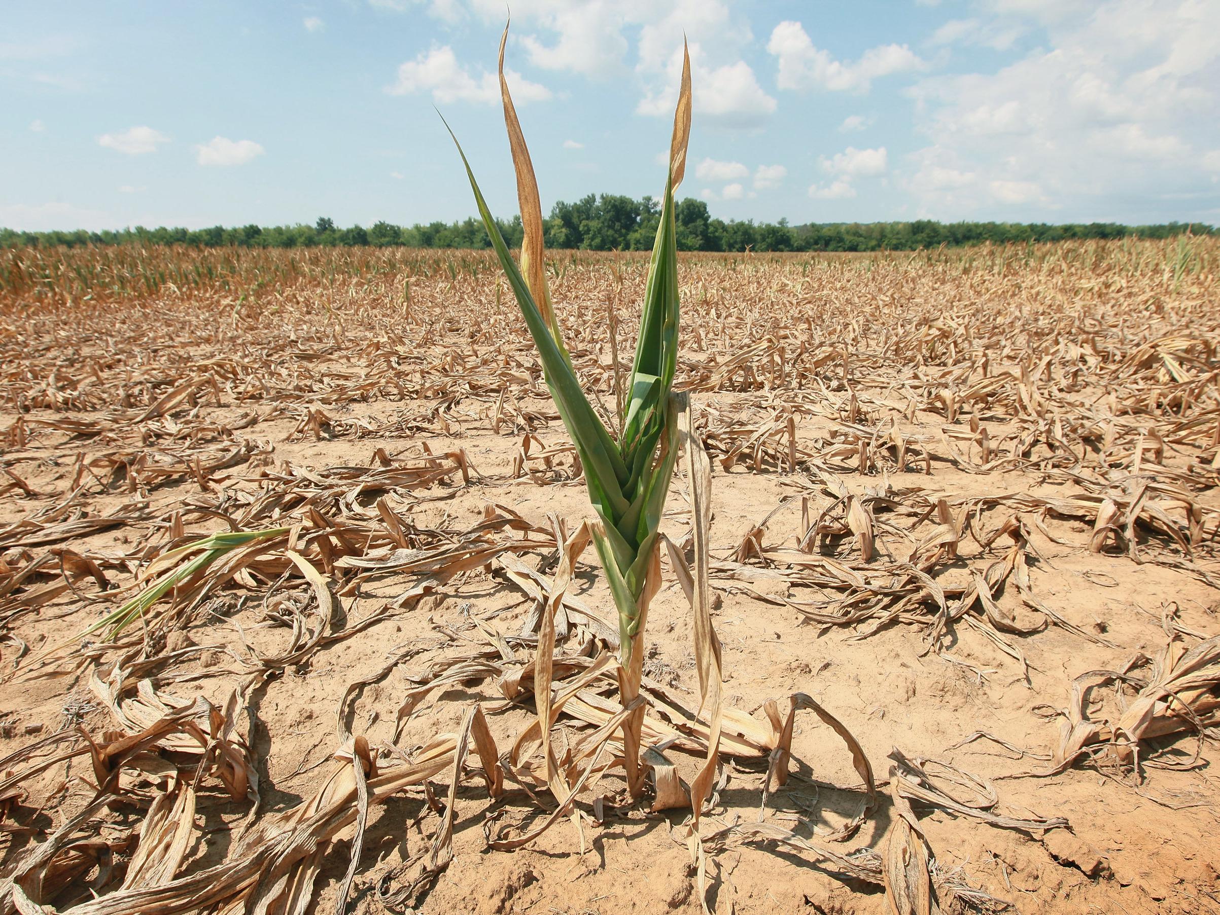 Desarrollan fertilizante natural que permite cultivar en suelos desérticos