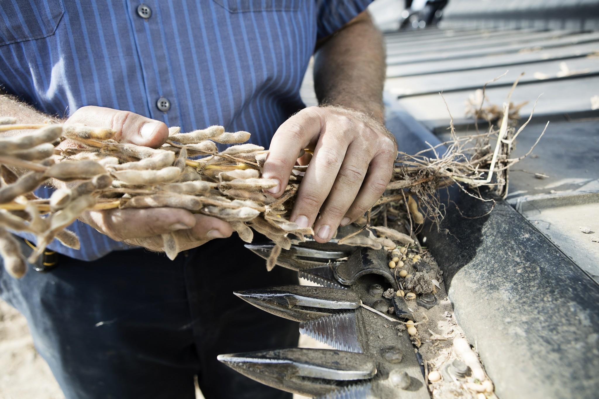 BASF busca adquirir parte significativa del negocio de semillas y de herbicidas no selectivos de Bayer