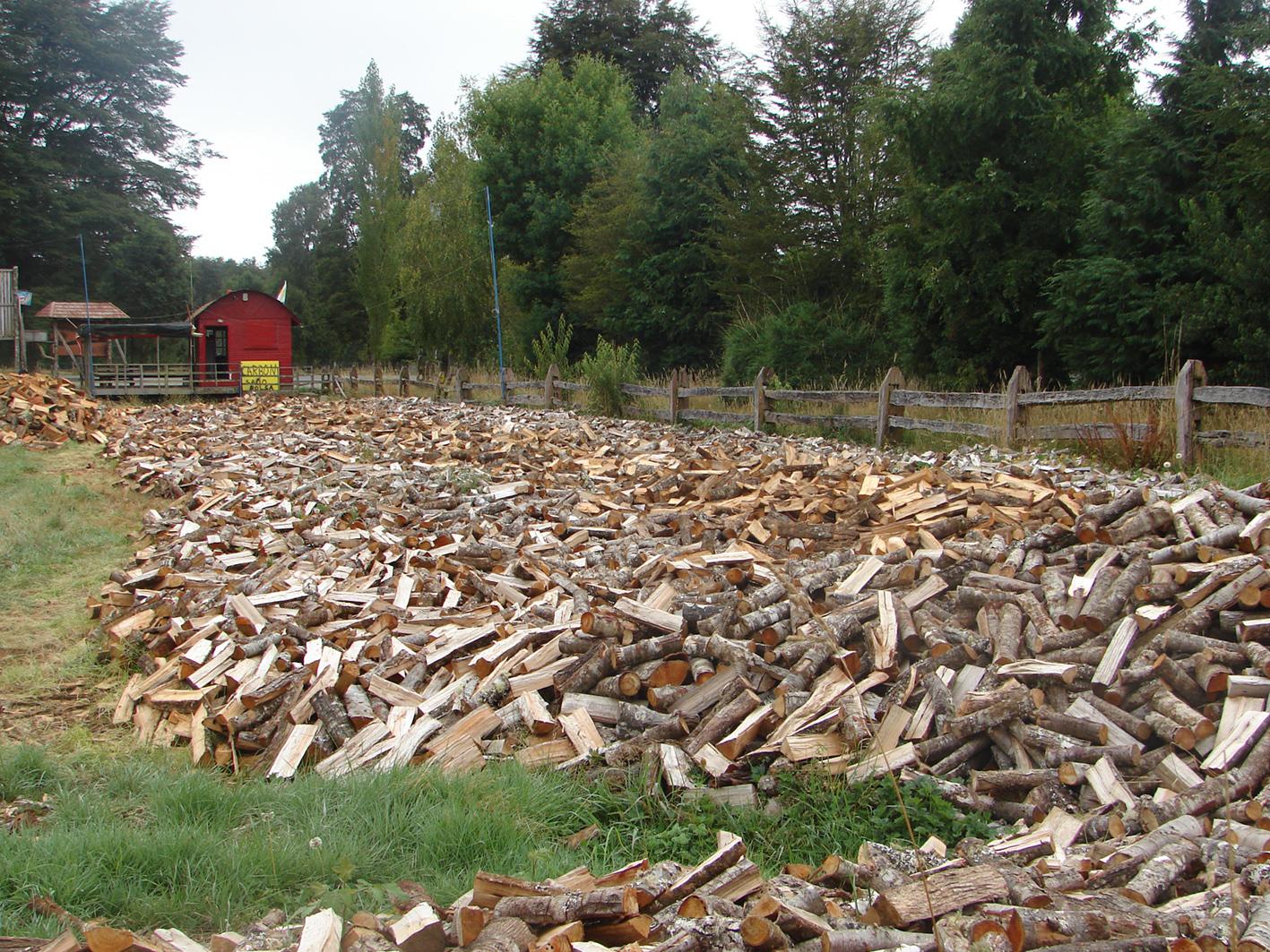 Implementarán Centro de Biomasa en Aysén para aprovechar recursos forestales