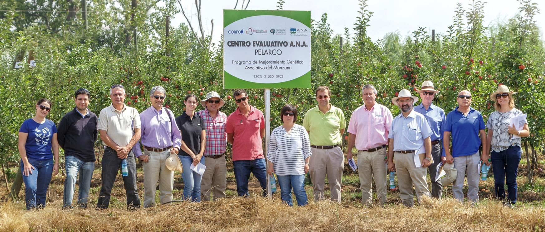 Exitoso Programa de Mejoramiento Genético en Manzano