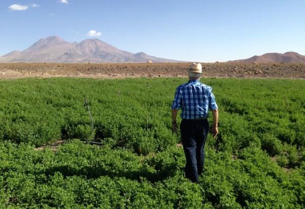 Agricultores proyectan auspiciosa la presente temporada