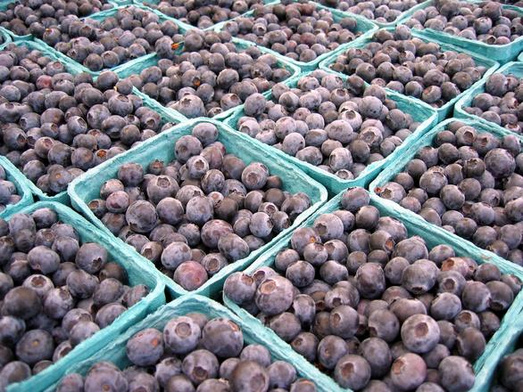Exportación de arándanos supera las 100 mil toneladas