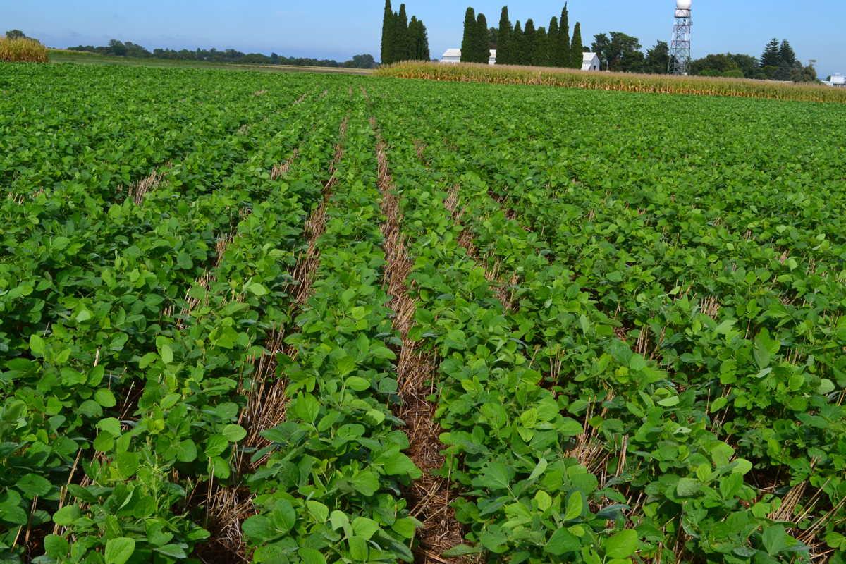 Desarrollan un software que indica qué variedad sembrar y cuándo