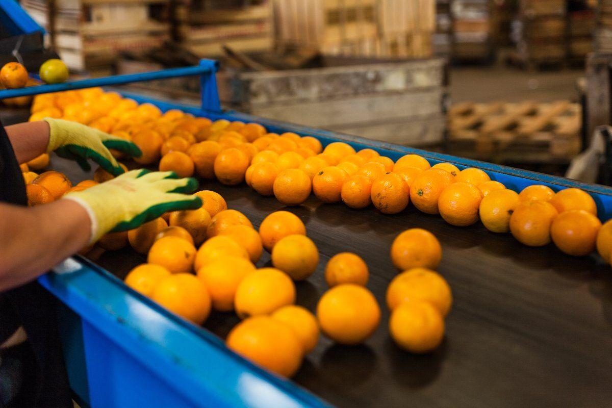 Achipia busca fortalecer a la trazabilidad de los alimentos