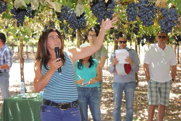 Chile será sede del IX Simposio de uva de mesa