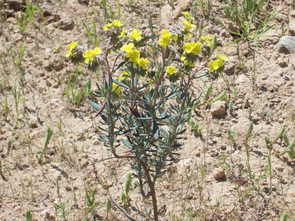 Las plantas pueden extraer agua de minerales como el yeso