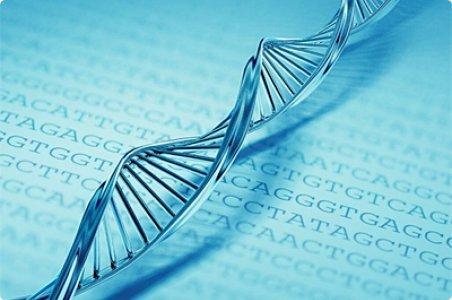 Proponen editar el genoma de las frutas sin introducir genes foráneos