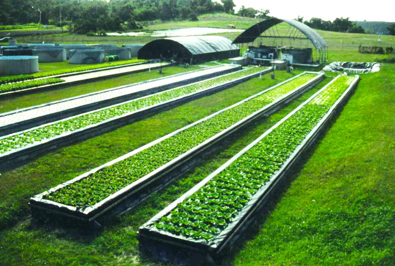 ACUAPONIA: sistema de producción conjunta de peces y plantas