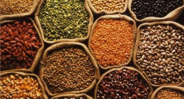 INIA conserva el patrimonio nacional de semillas de Chile