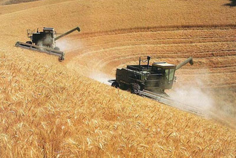SAG Bío Bío analiza temporada de trigo