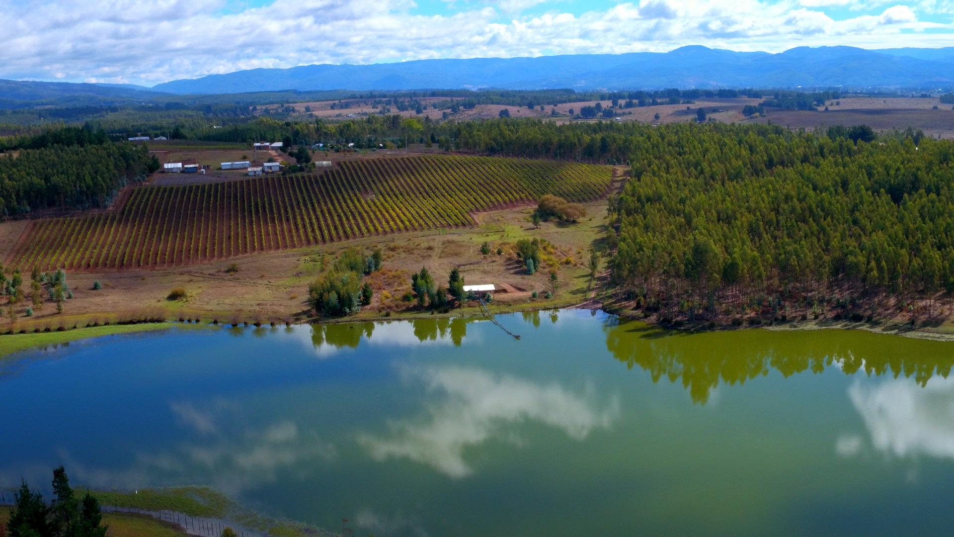 Viña San Pedro desarrolla el mayor viñedo mapuche