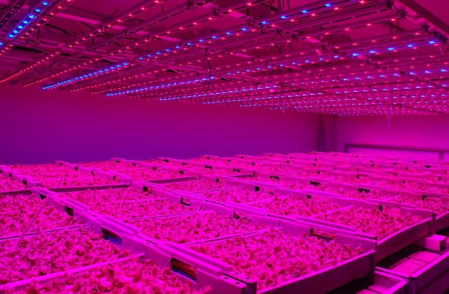Tecnología LED para la producción de tomate