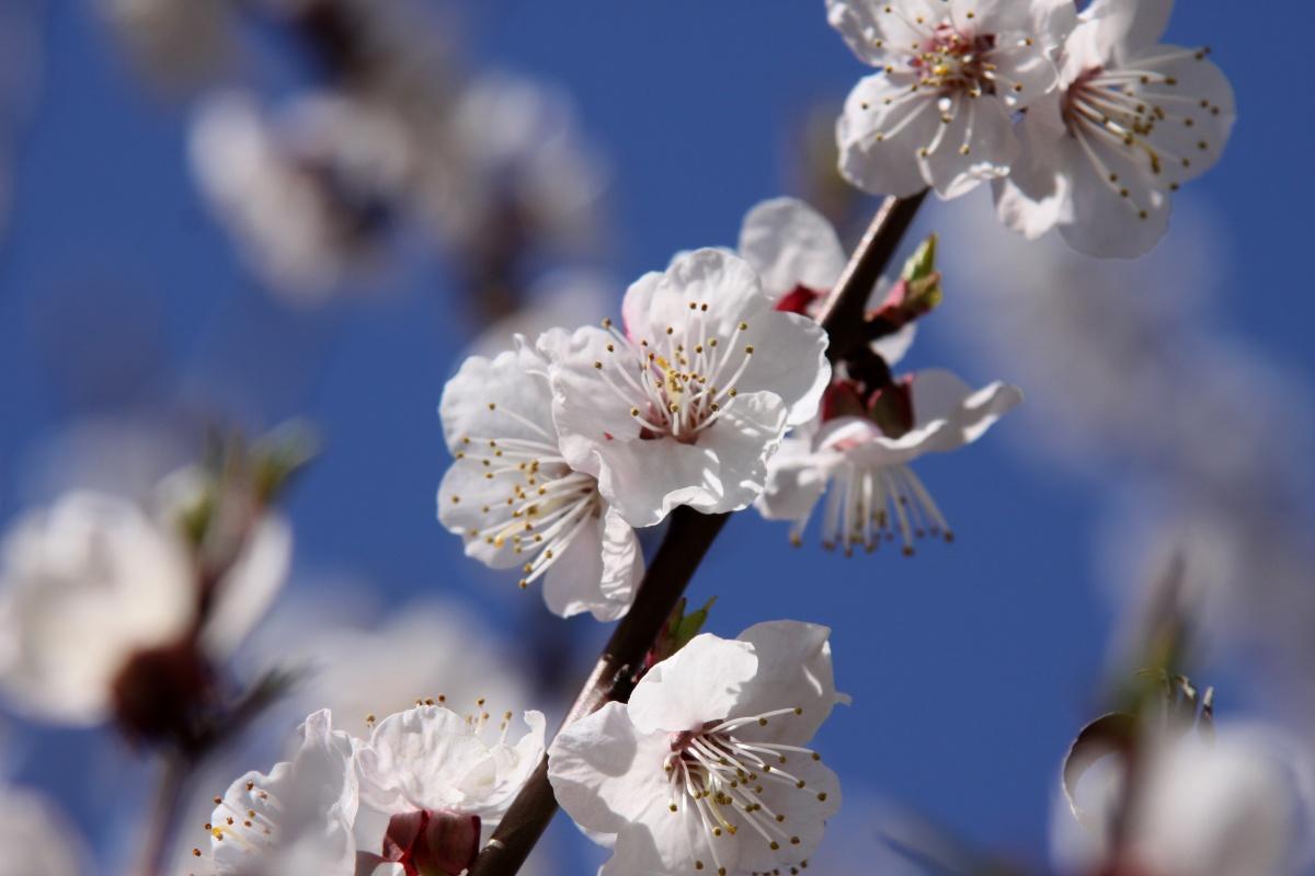 Descubren por qué florecen las plantas