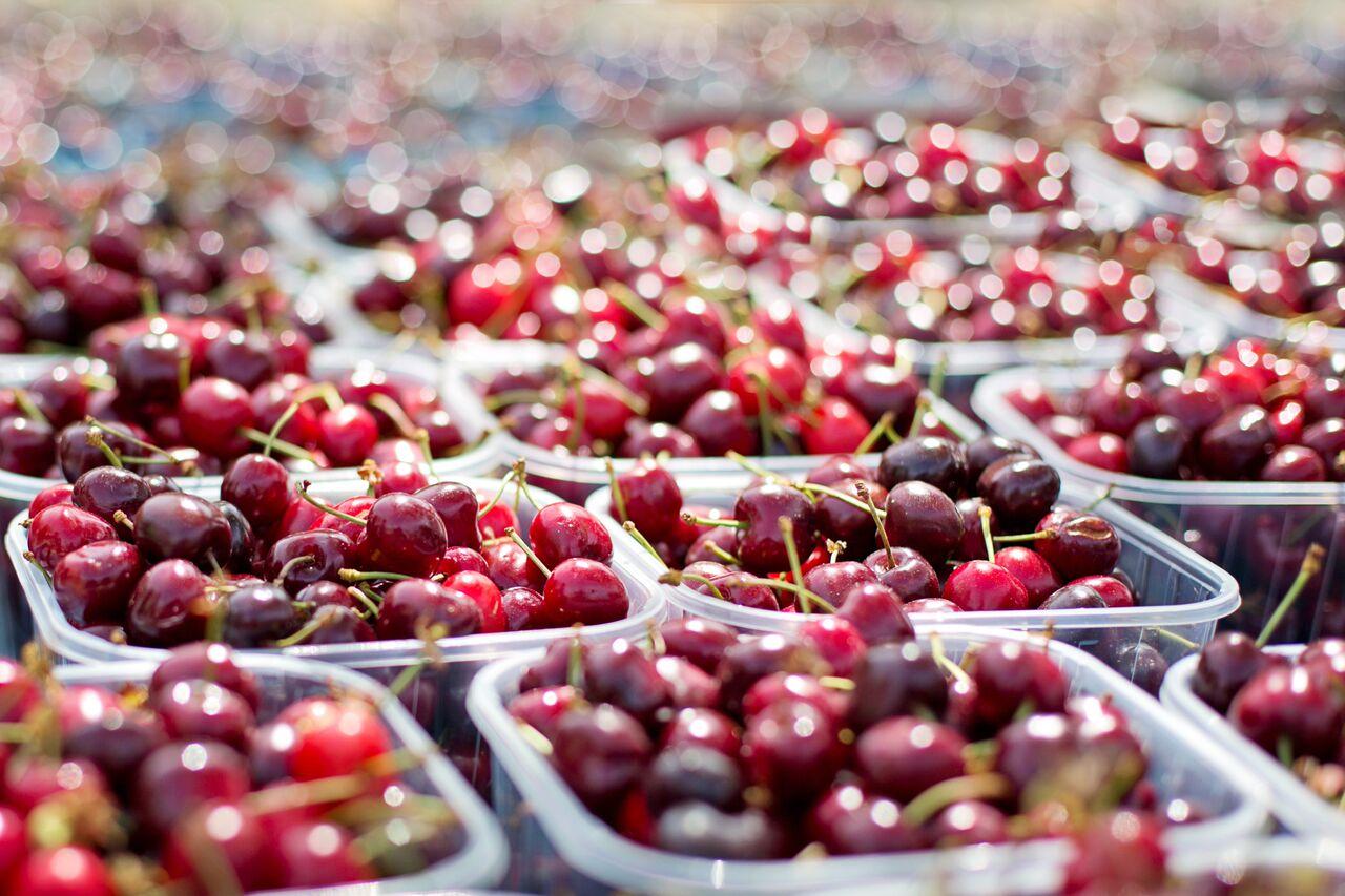 Exportaciones de cerezas marcan récord superando las 150 mil toneladas