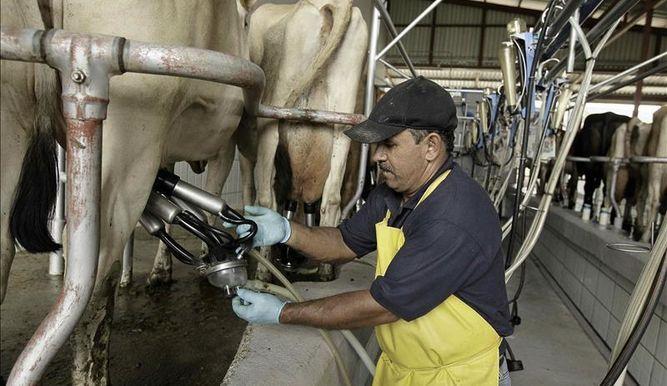 Preció de la leche aumentó los últimos meses