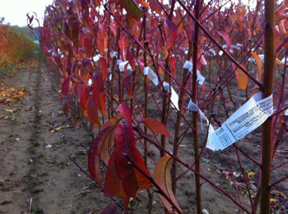 SAG autoriza al ingreso de plantas frutales sin cuarentena desde Francia