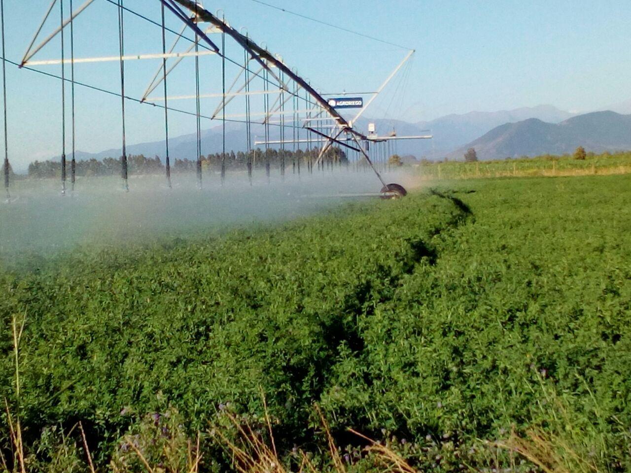 Realizan demostración de potenza Amino + Microlife Bio en alfalfa