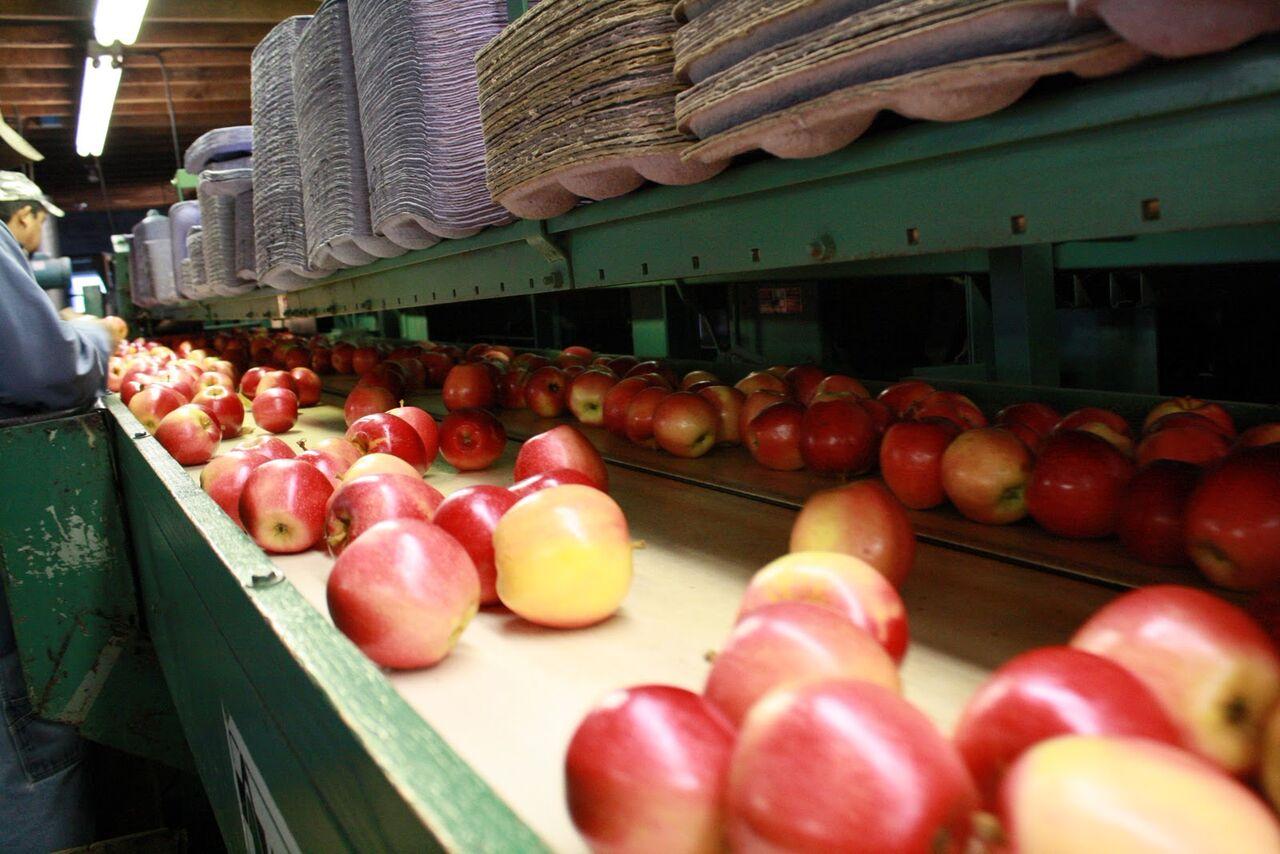 Producción mundial de manzanas presenta una baja