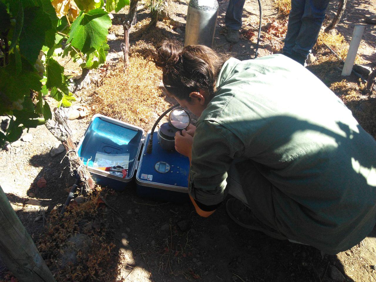 Productores de Olivos y viñedos mejoran gestión del riego