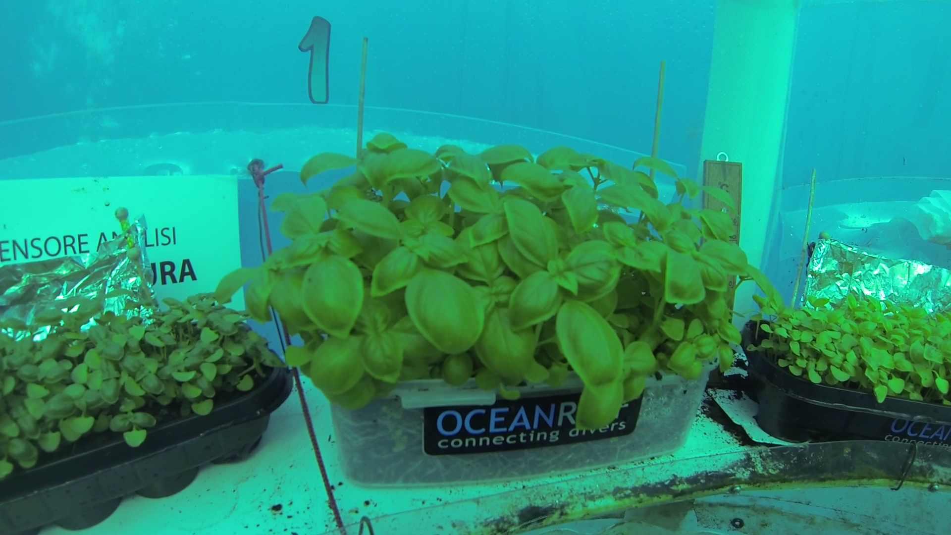 Invernaderos bajo el mar para dar de comer al planeta en el futuro