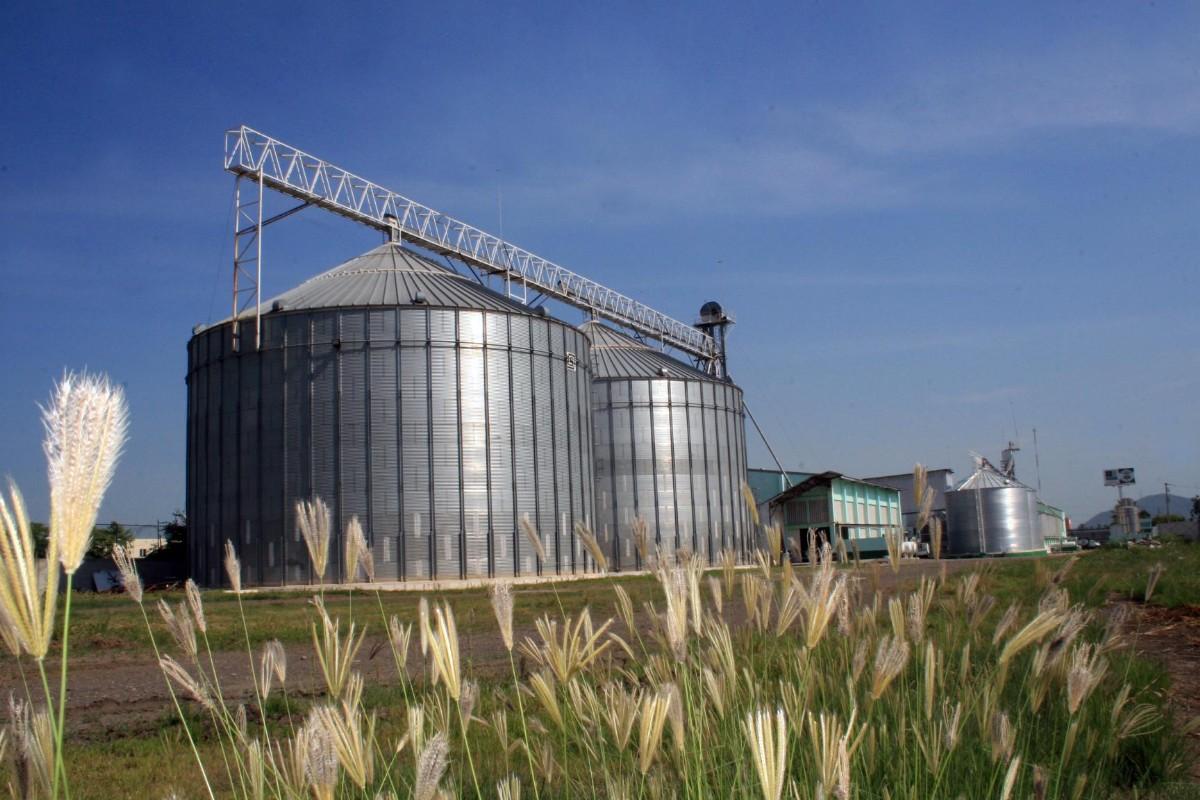 Crean proceso para eliminar las plagas de grano almacenado a través de ozono