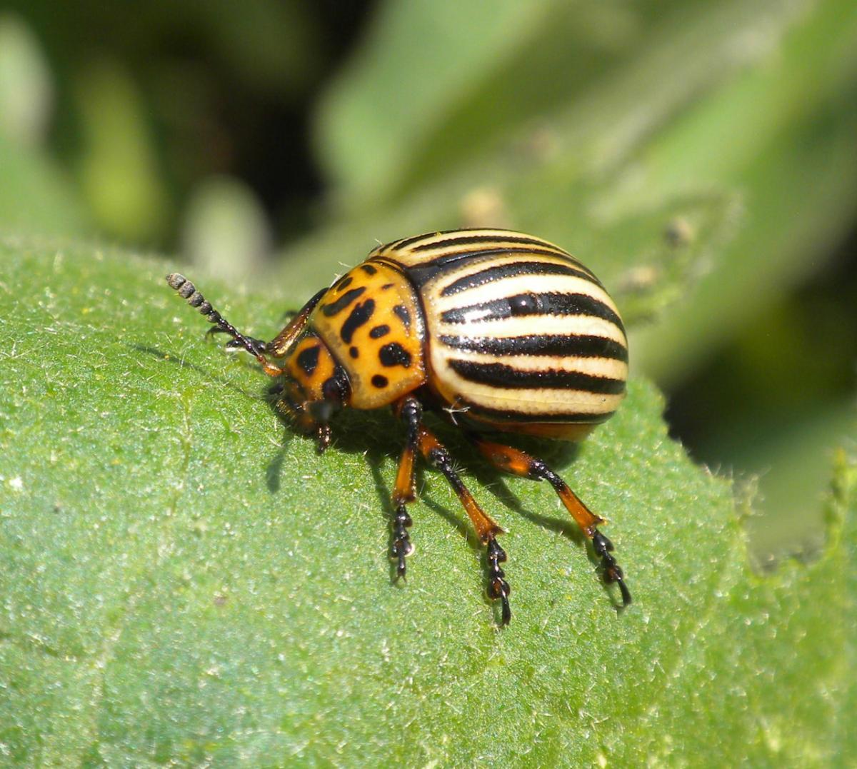 Descubren insecticida que selecciona por su ADN a los insectos que mata