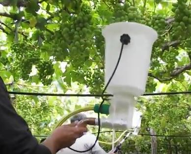 Patohormonador, un invento chileno para aplicar hormona vegetal