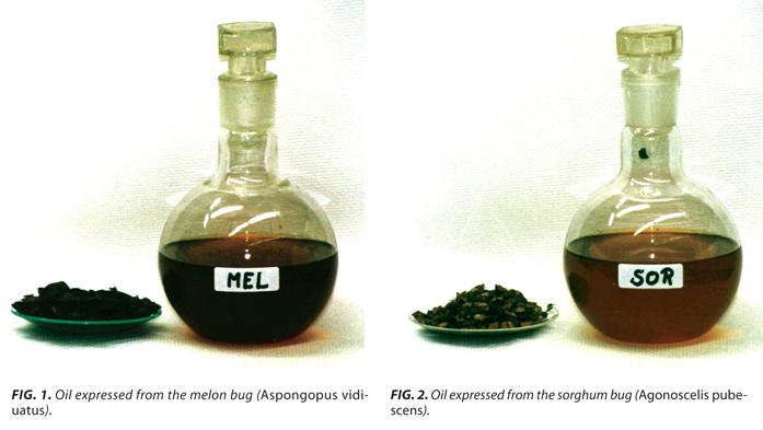 Analizan producir aceites para consumo a partir de insectos