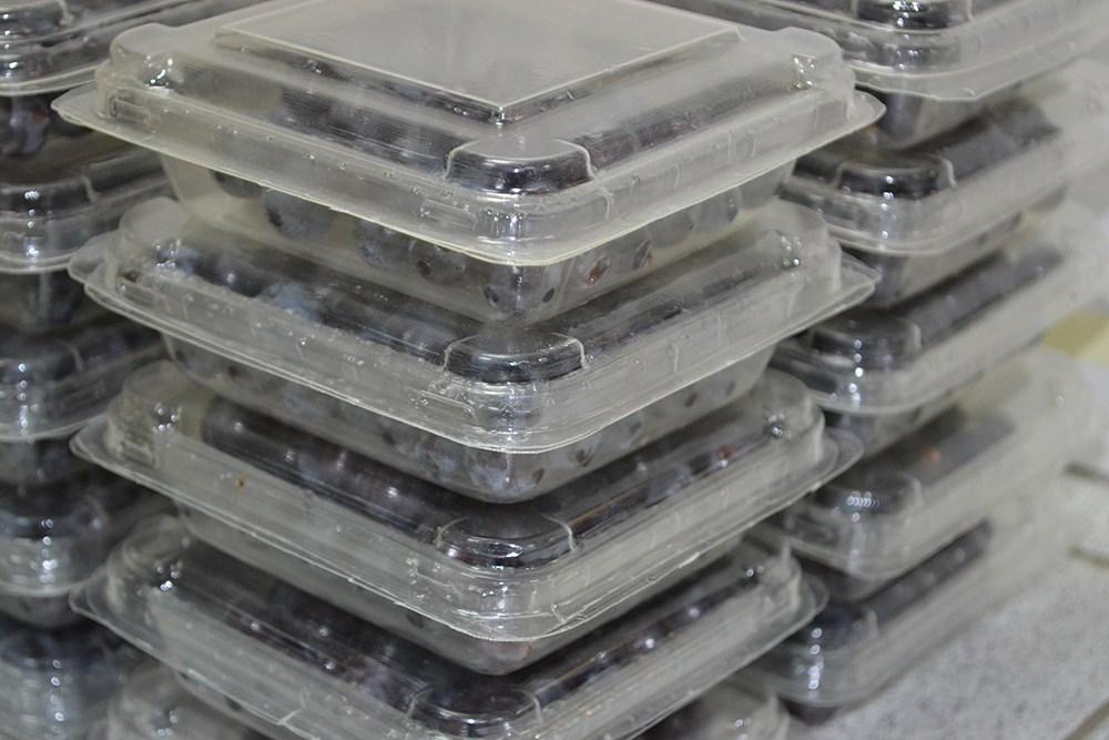 Desarrollan clamshell biodegradable para arándanos