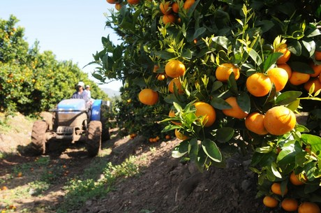 citricos2
